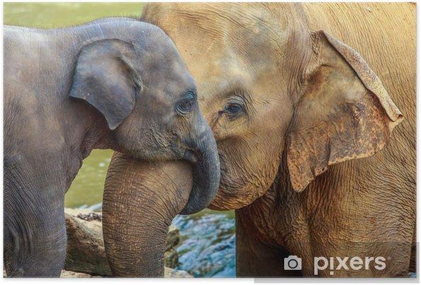 Poster Éléphant et bébé éléphant - Mammifères