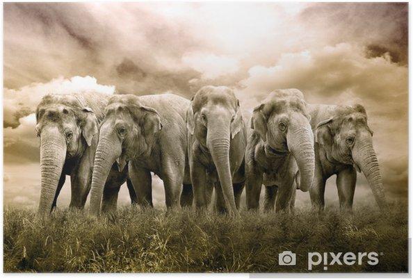Poster Elephant Herd - Thèmes