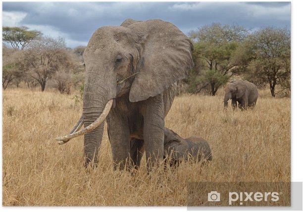 Elephant Nursing Poster - Themes