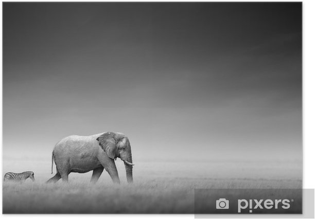 Elephant with zebra (Artistic processing) Poster -