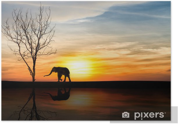 Poster Éléphants de silhouette sur le coucher du soleil - Thèmes