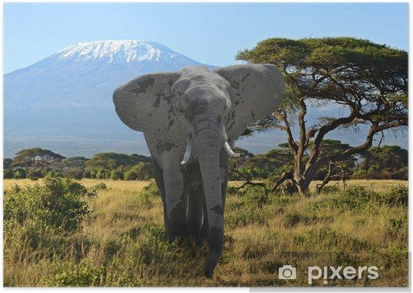 Poster Éléphants du Kilimandjaro - Thèmes