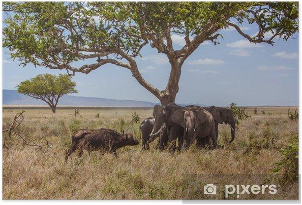 Poster Éléphants du paysage africains sont protégés contre les buffles - Thèmes
