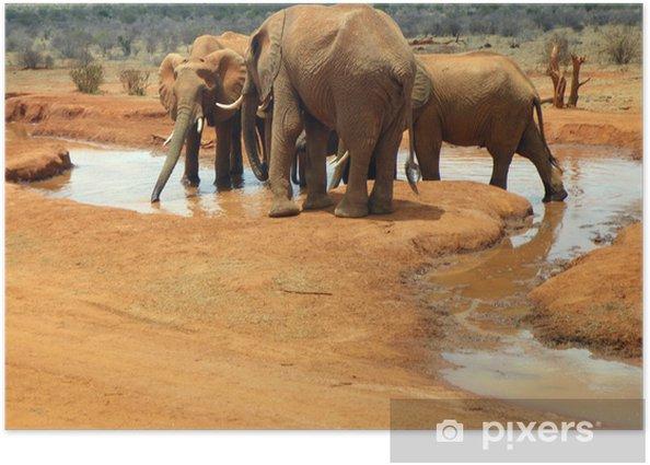 Elephants in Tsavo Poster - Themes