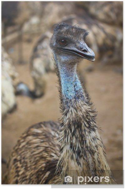 emu fågel
