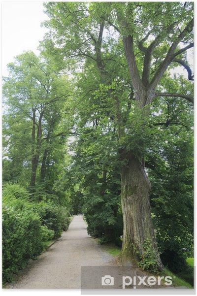Poster Enorme oude bomen in de tuin van het kasteel Konopiste - Europa