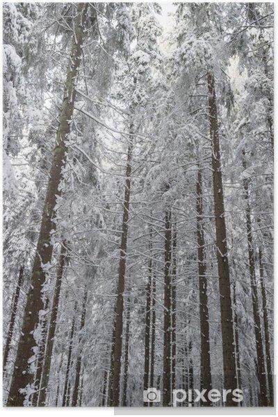 Poster Épicéa bois dans la neige - Saisons