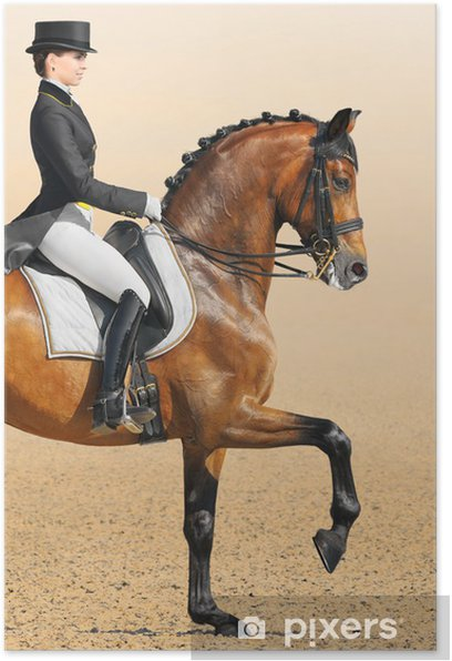 Equestrian sport - dressage, closeup Poster - Individual Sports