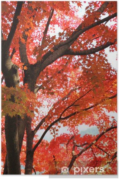Poster Érable japonais à l'automne - Saisons