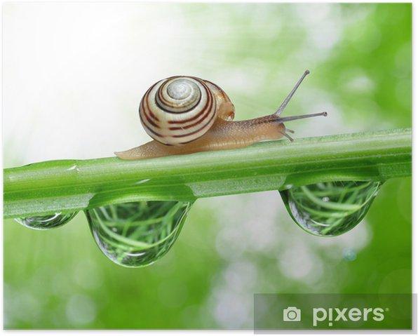 Poster Escargot sur l'herbe humide de rosée - Autres Autres
