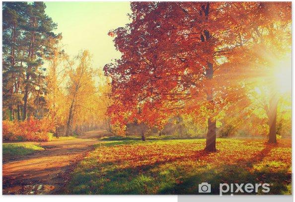 Póster Escena del otoño. Fall. Los árboles y las hojas en la luz del sol - Temas