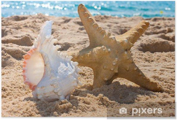 Poster Étoiles de mer et shell - Eau