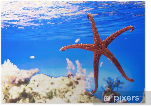 Poster Étoiles de mer sur un fond bleu - Animaux marins