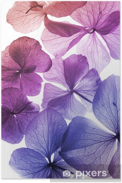 Poster Färgglada blommor närbild - Stilar
