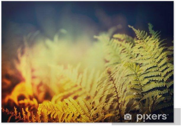 Fern leaves on dark nature background, outdoor Poster - Landscapes