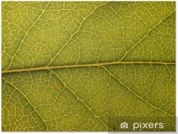 Poster Feuille verte avec la structure - Saisons