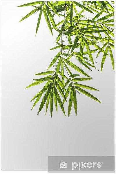 Poster Feuilles de bambou isolé sur fond blanc, chemin de détourage inclus, - Maisons et jardins