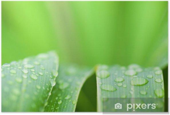 Poster Feuilles fraîches de vert - Plantes