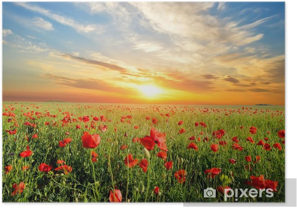 field with poppies Poster - Themes