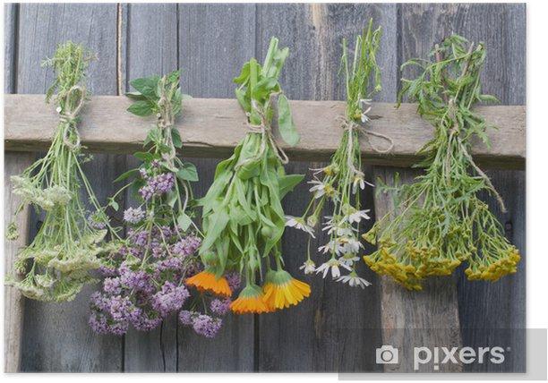 Poster Fines herbes - Maisons et jardins