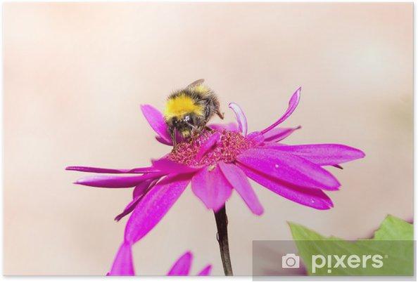 Poster Fleur avec l'abeille - Autres Autres