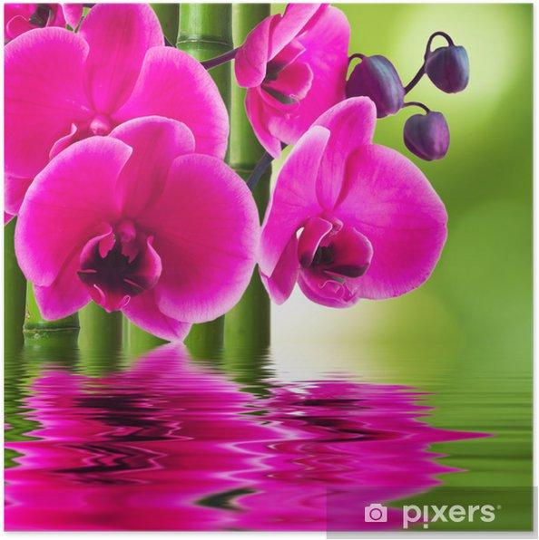poster fleur d 39 orchid e avec le bambou et la r flexion dans l 39 eau pixers nous vivons pour. Black Bedroom Furniture Sets. Home Design Ideas