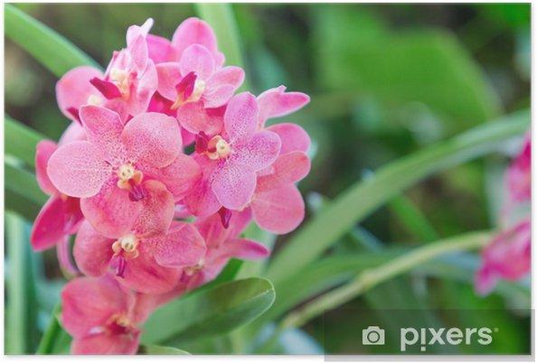 Poster Fleur d\'orchidée dans le jardin d\'orchidée à l\'hiver ou au ...