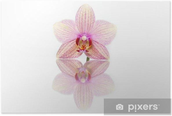 Poster Fleur d'orchidée - Fleurs