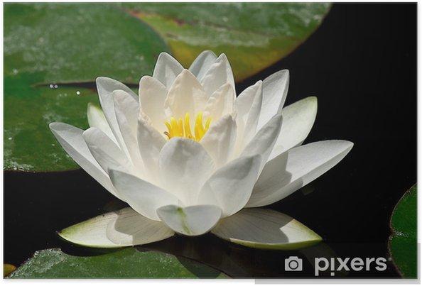 Fleur De Lotus fleur de lotus poster • pixers® • we live to change