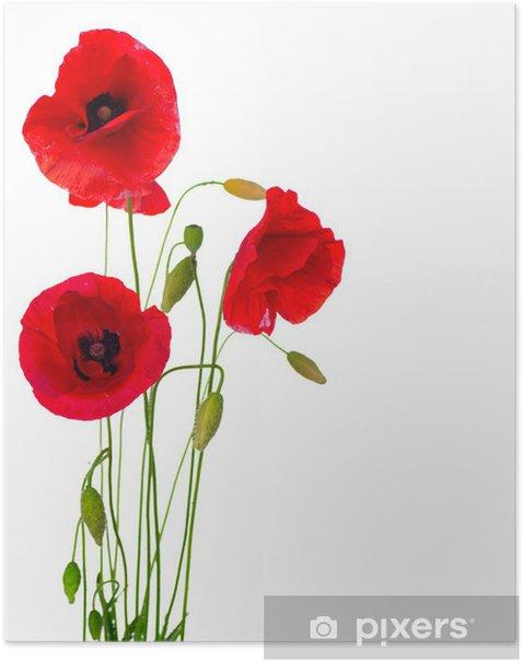 Poster Fleur de pavot rouge isolé sur un fond blanc - Destin