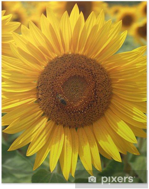 Fleur De Tournesol Butinee Par Une Abeille Poster Pixers We