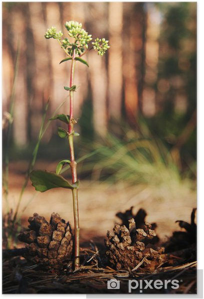 Poster Fleur forêt - Fleurs