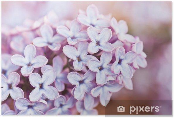 Poster Fleur Lilas Pixers Nous Vivons Pour Changer
