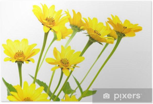 Poster Fleur Marguerite Jaune Pixers Nous Vivons Pour Changer