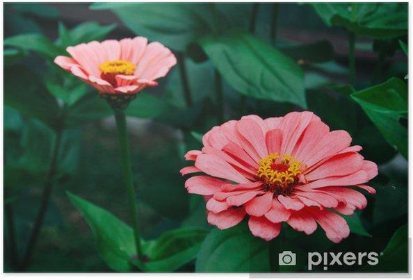 9d9e394c037b0 Poster Fleur, nature, jardin, rouge, rose, plante, flore, zinnia ...