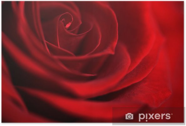 Poster Fleur Rose Rouge Symbolisant L Amour Pixers Nous Vivons