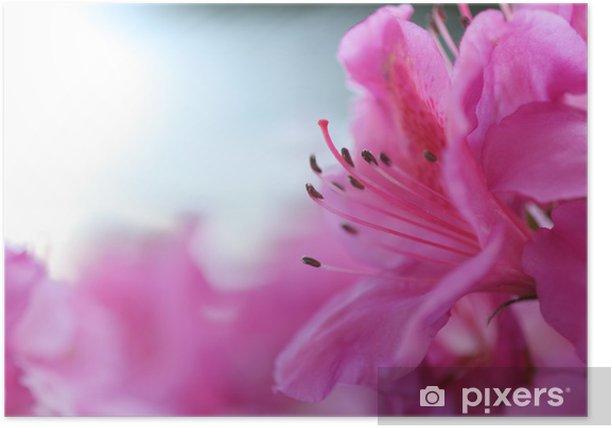 Poster Fleur rose - Fleurs