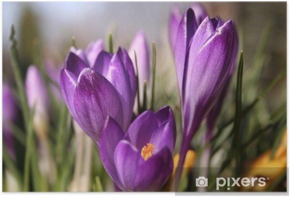Poster Fleur violette - Fleurs