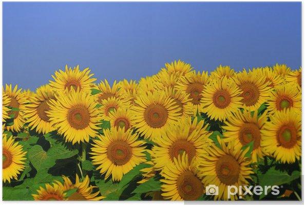 Póster Fleurs d'été - Temas