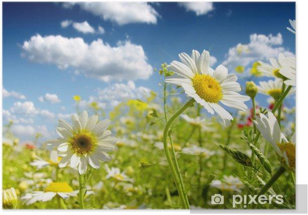 Poster Fleurs d'été - Fleurs