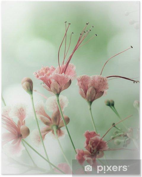 Poster Fleurs de paon - Fleurs