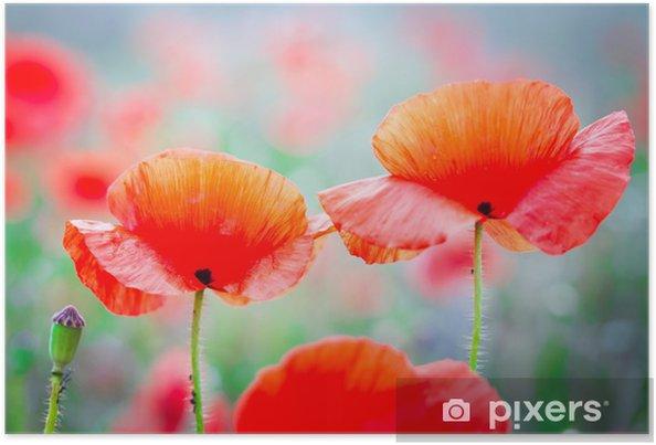 Poster Fleurs de pavot fleur sur le pré - Fleurs