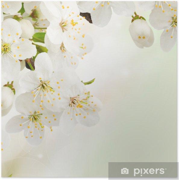 Poster Fleurs de prune dans le jardin vert de près - Textures