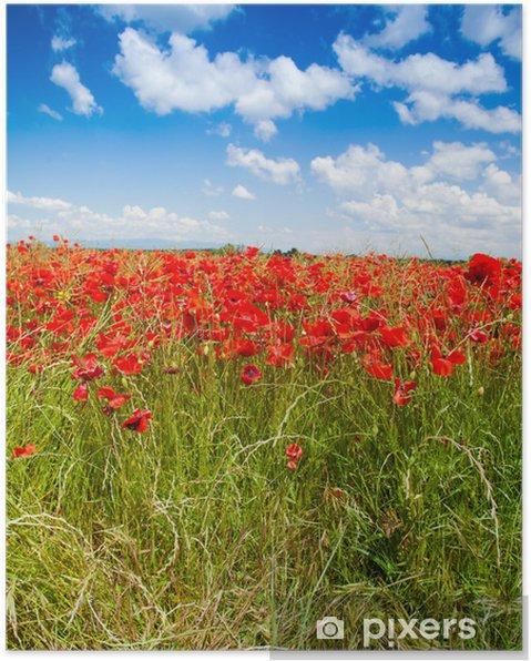 Poster Fleurs rouges de pavot sous un ciel de printemps - Agriculture