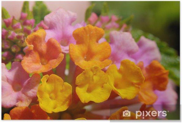 Poster Fleurs sauvages hawaïennes, photo macro - Fleurs