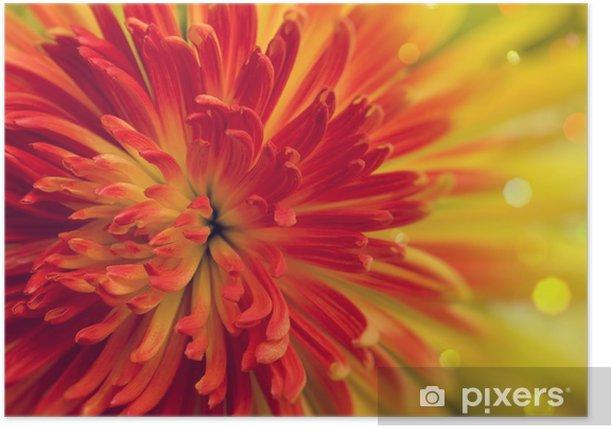 Póster Flor de naranja-rojo - Flores