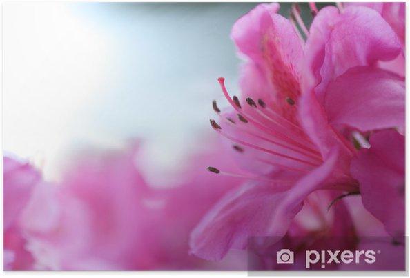 Póster Florecer rosadas - Flores