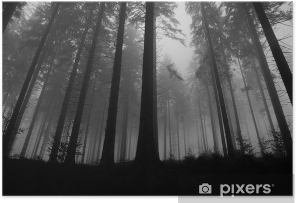 foggy forest Poster -