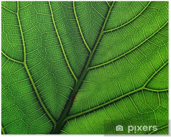 Poster Foglia - Merveilles naturelles