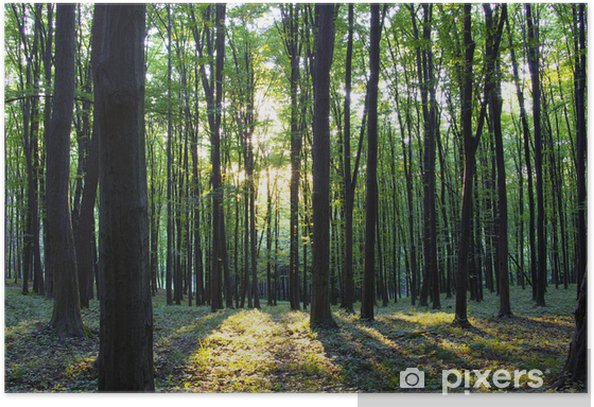 Forest Poster -
